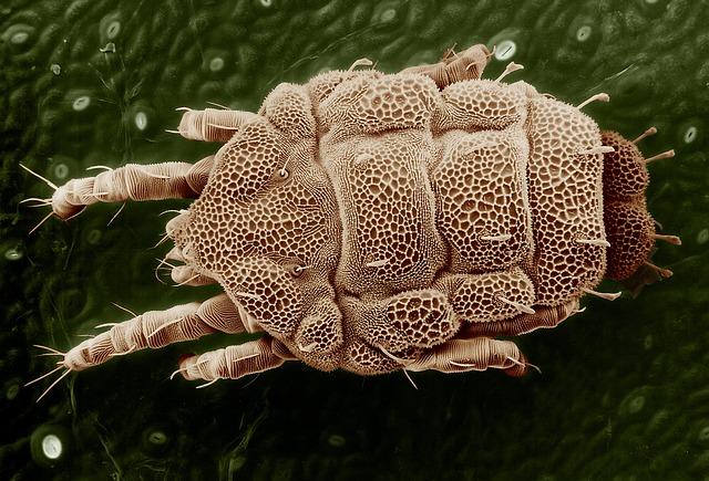 Parasiten des Menschen auf dem Vormarsch?