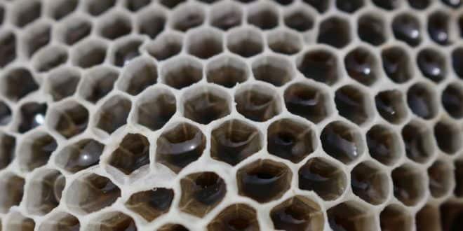 Manukahonig: die heilende Wirkung aus der Bienenwabe