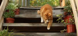 Treppen sicher bauen: Bei der Planung an die Sicherheit denken