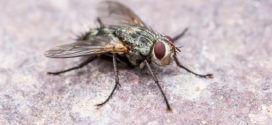 Die besten Hausmittel gegen Fliegen