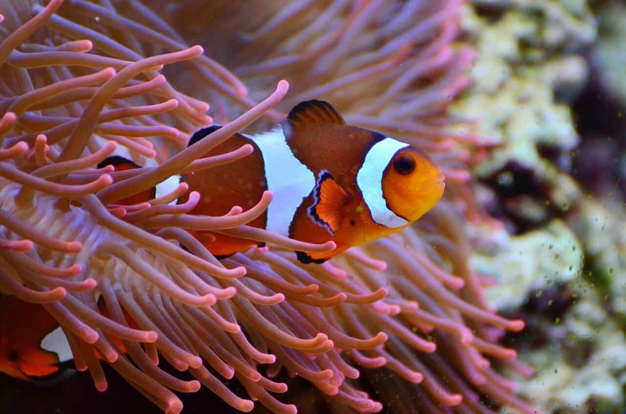 Pflanzen für das Aquarium – nicht nur schön, sondern auch gut für die Fische