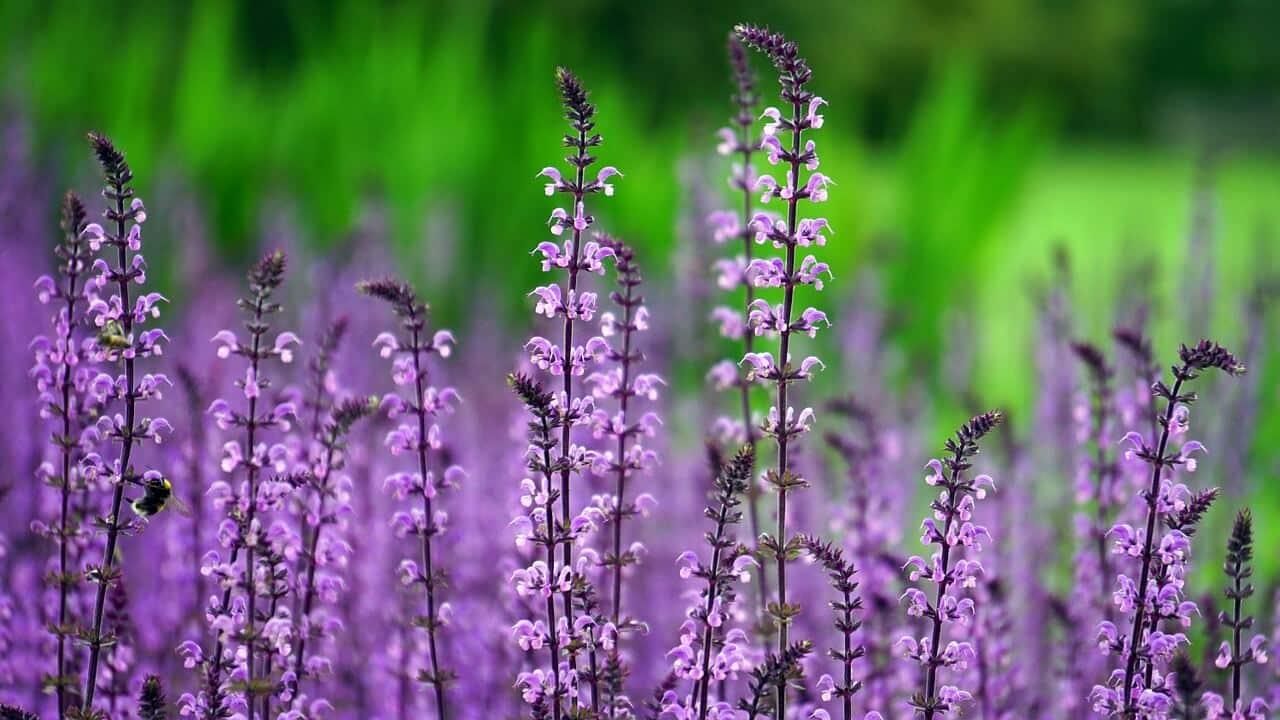 Warum uns Gartenarbeit so glücklich macht: Die Psychologie erklärt es