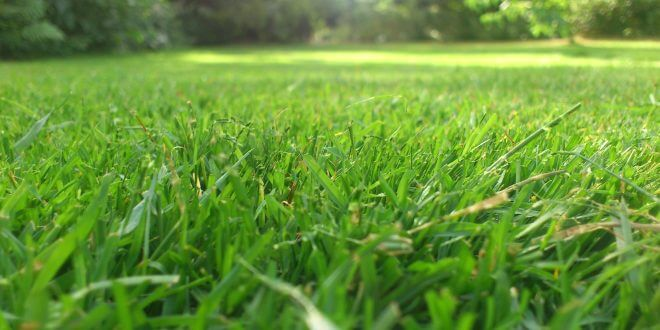 Mit der passenden Motorsense optimale Ergebnisse im Garten erreichen