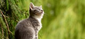 Katzen sind nicht personen- sondern umgebungsbezogen
