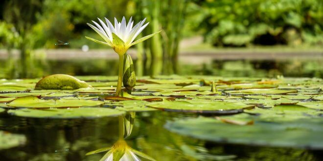Inspirierende Ideen zur Gartengestaltung