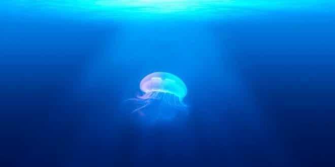 Spannend: Warum ein Aquarium gut für die Gesundheit ist