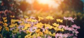 So bereitet man seinen Garten auf den Klimawandel vor