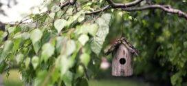 Privatsphäre im Garten – Diverse Möglichkeiten für den Sichtschutz