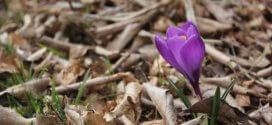 Gartenarbeit im Frühling: Die Spuren des Winters beseitigen